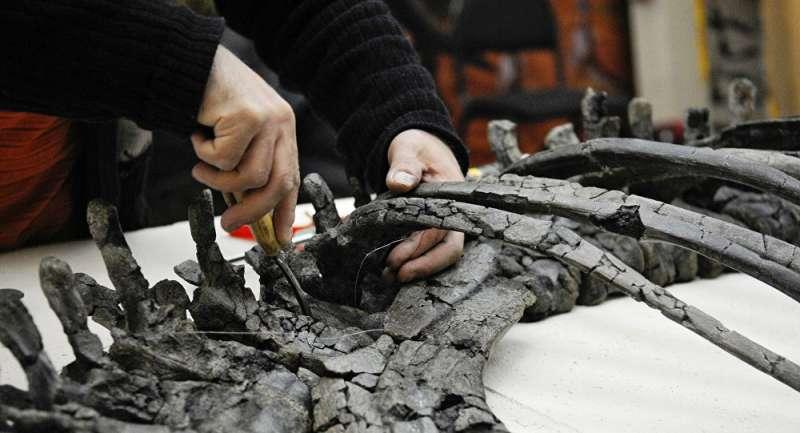 Ученые нашли окаменелости динозавров возрастом 71 млн лет