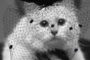 Պետք է առաջ գնամ առանց Կառլի և դառնամ ինքնուրույն կին. Լագերֆելդի կատուն շնորհակալություն է հայտնել բոլորին