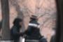 Թրաֆիքինգի դեպք են բացահայտել. Կասկածյալներից մեկը կին է /տեսանյութ/