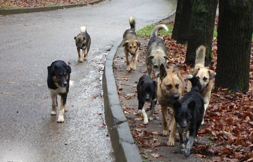 Երևանում թափառող շները հարձակվել են մարդկանց վրա. Փրկարարներին չի հաջողվել վնասազերծել շներին.Կան տուժածներ