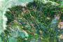 Ահավոր ծավալների ապօրինի հատումներ՝ Իջևանի անտառտնտեսության անտառներում