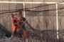 Կոկորինը և Մամաևը ֆուտբոլ են խաղացել կալանավայրում /Տեսանյութ/