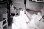 Համացանցում հայտնվել է Լենինգրադում դիջեյի սպանության տեսանյութը