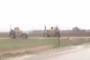 Սիրիայում ամերիկյան ուժերը փակել են ռուսական շարասյան ճանապարհը /տեսանյութ/
