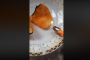 Ահազանգ. Սա ուռուցքի բուն է, երեխաներն, ուտելով այդ չիպսը, լրջագույնս վտանգում են իրենց կյանքը /տեսանյութ/