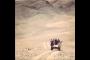 haqqin.az-ը աֆղանական պատերազմի տեսանյութը ներկայացնում է որպես ադրբեջանական բանակի «հաջողություն»