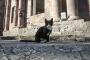 Շաբաթվա լավագույն լուսանկարների շարքում հայտնվել է նաև Արցախի Մարտունի քաղաքի կատվի նկարը