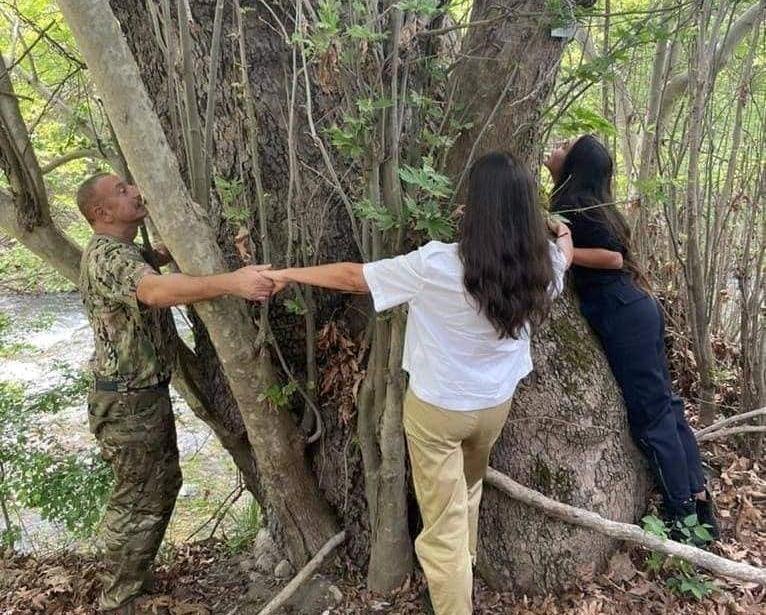 Թող իրենք կողմնորոշվեն՝ տվե՞լ են, թե՞ ոչ,այդպիսի ծառ աճում է միայն Հայաստանի տարածքում.Երեւի Ալիեւն է սահմանը խախտել, հայկական տարածքում նկարվել