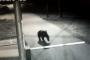 Յակուտիայում արջը ներխուժել է մանկատուն /Տեսանյութ/