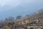 «Արևիկ» ազգային պարկում հրդեհաշիջման աշխատանքները շարունակվում են
